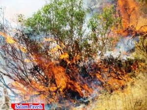 آتش سوزی پاوه