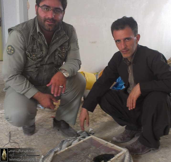 20 قطعه پرنده سهره از شکارچیان غیر مجاز در پاوه کشف شد
