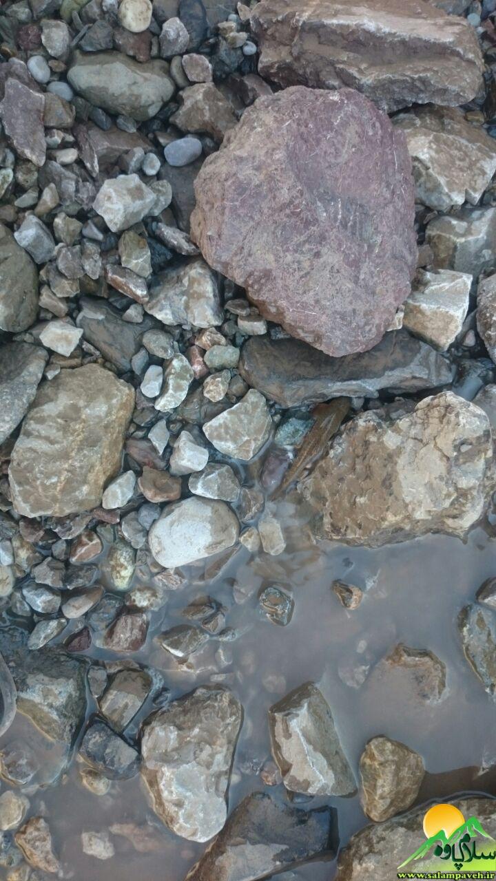 آبزیان رودخانه سیروان