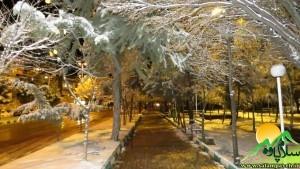 برف20