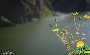 سد داریان (3)