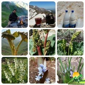 طبیعت پاوه- مربوط محمدی