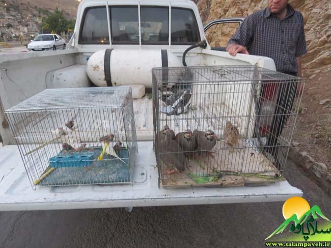 پرندگان زینتی + محیط زیست پاوه