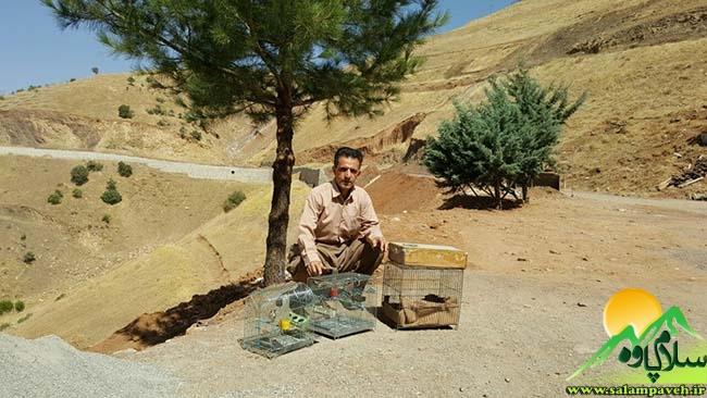 سهره طلایی + سلام پاوه ، محیط زیست