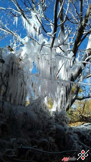 بلور یخ بر پیکر برگ های پاییزی