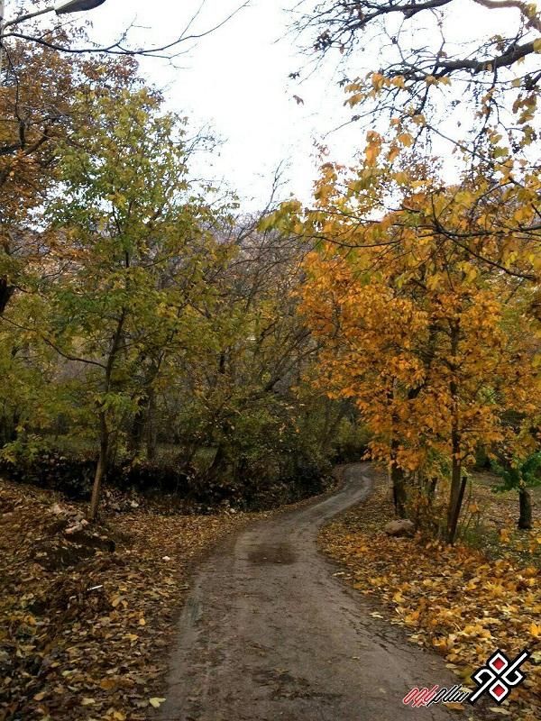 شهرستان پاوه ، طبیعت زیبای پاییزی روستای نسمه ، عکس: کیا حسینی