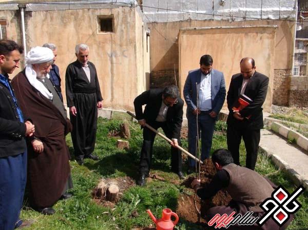 غرس درخت توسط رئیس کل دادگستری استان در پاوه/ دیدار با خانواده شهید سیفی /عکس