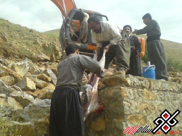 چگونه کوخ نشینان شهر پاوه کاخ نشین شدند!؟/ عکس